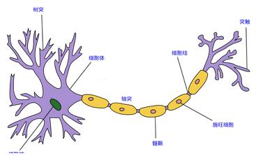 深入浅出|深度学习算法之BP神经网络 详细公式推导